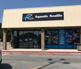 Aquatic Sealife