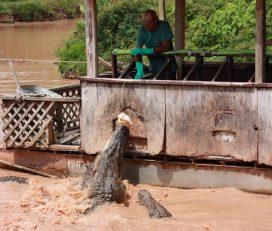 Bayou Pierre Alligator Park